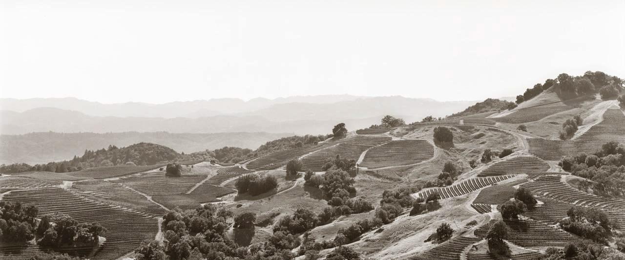 Fifth Ridge Vineyard